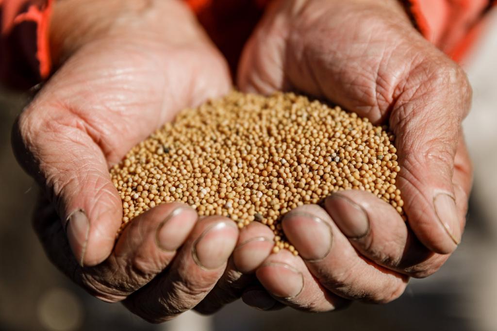 grano de mostaza