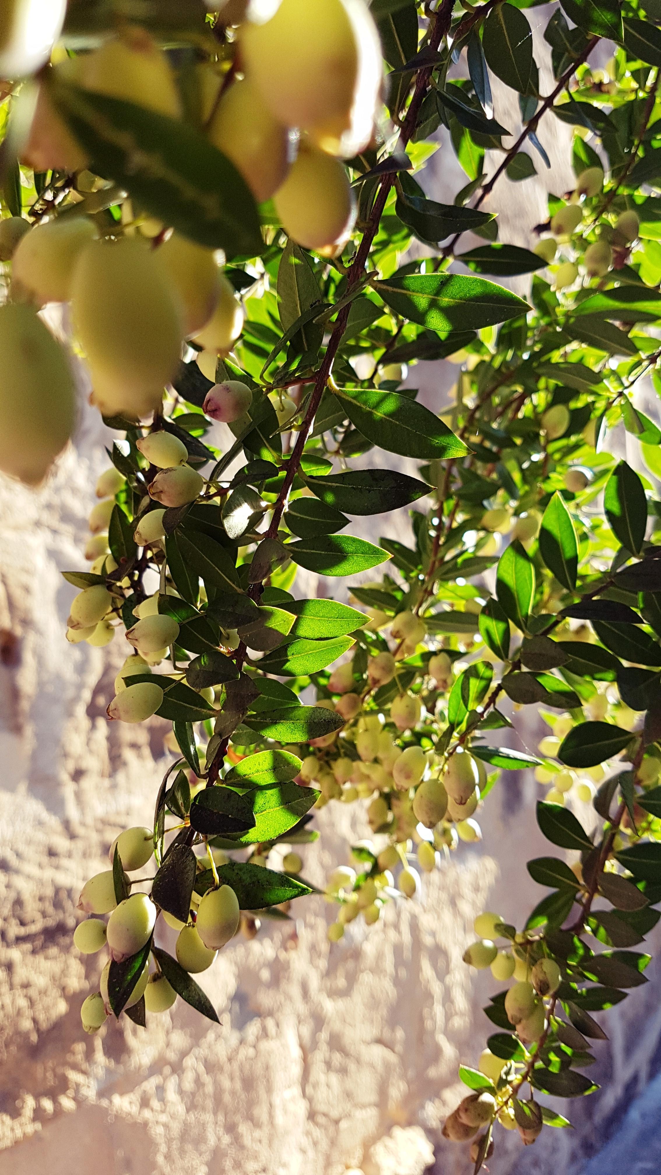 árbol que da frutos